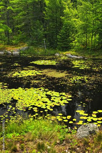 Lily pads on lake