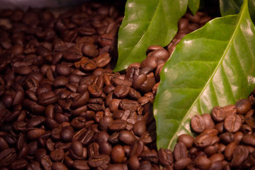 coffee bean and leaves