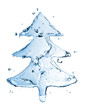 fir tree from water splash isolated on white - 26514085