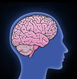 Illustration of human brain poster