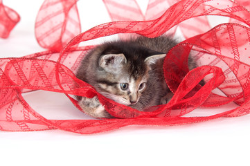 Kitten playing with red ribbon