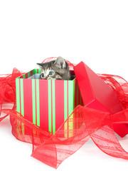 cute tabby kitten in gift box