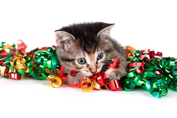 tabby kitten with Christmas tinsel
