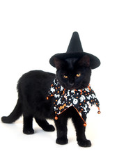 Black cat with witch hat and Halloween bib