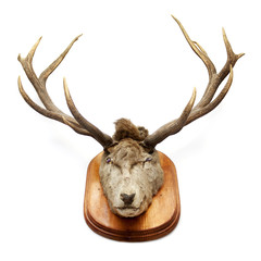 Old hunting trophy