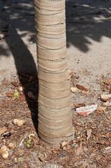 Protector de troncos