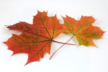 Autumn leaves 8