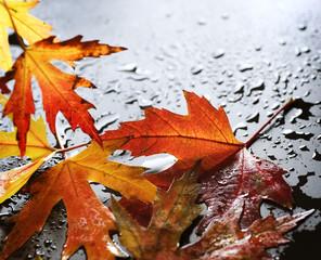 Wet Autumn leaves over black