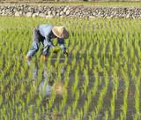 asian farmer planting by organically skill. poster