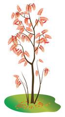vector illustration with autumn rowan