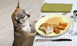 Chihuahua looking at leftover food on plate at dinner table