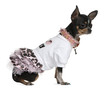 Chihuahua dressed up, 1 year old, sitting