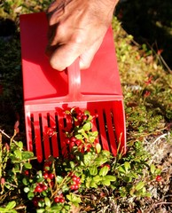 Handheld berry picker