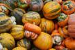 Various Pumpkins and Squash