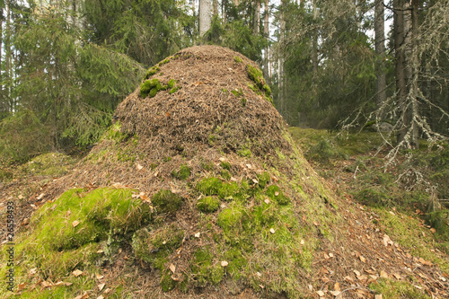 Gigantic ant hill built by southern wood ant