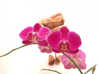 Orchid and wooden rose