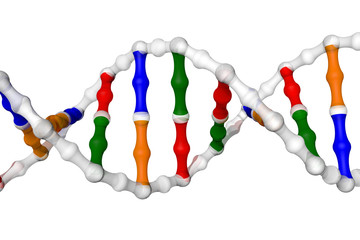 DNA helix (white background)