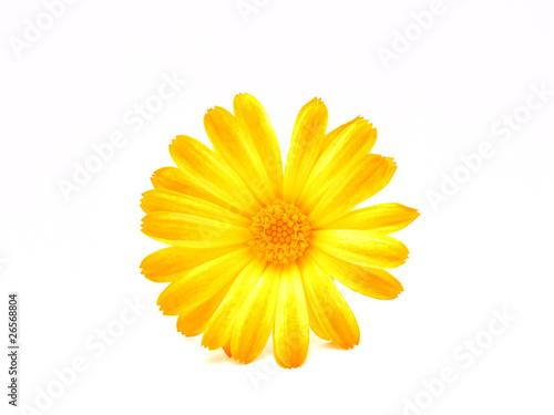 Poster Flower