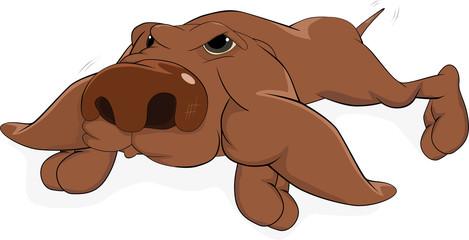 Impudent dog