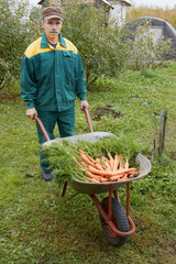 Wheelbarrow with carrot