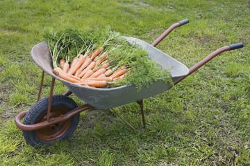 Wheelbarrow with carrot