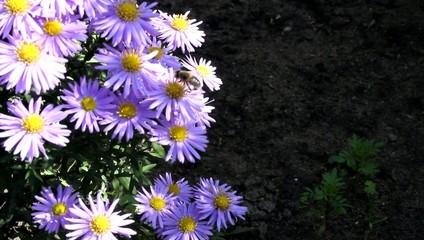 biene auf Blumen