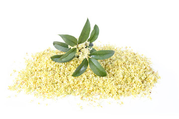 sweet osmanthus flower