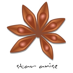 vector star anise on the white background