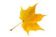 Ahornblatt, Maple leaf