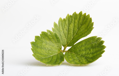 Strawberry leafs