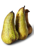 Thre long pears (Abate Fetel pears) poster