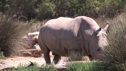 A rhinoceros standing in a zoo in HD