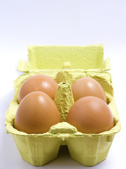 Four eggs in a green holder - front view