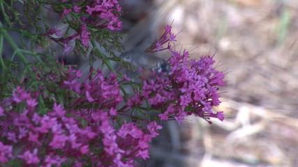 Little bird flying near purple flowers