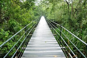Puente sobre la selva de Costa Rica