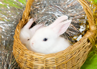 white rabbits in basket