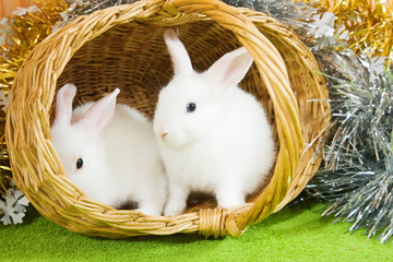 white rabbits in basket