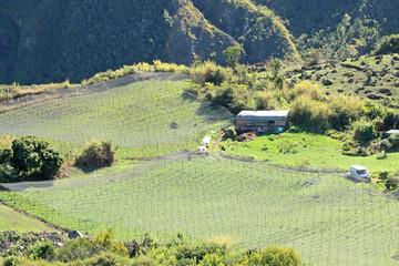 vignoble dans le cirque de Cilaos, île de la Réunion
