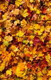 Fototapety Autmn leaves