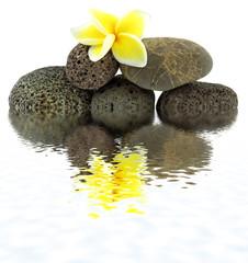 fleur de frangipanier sur galets de basalte