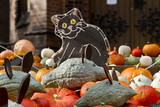 2010_pumpkinfield_micecat