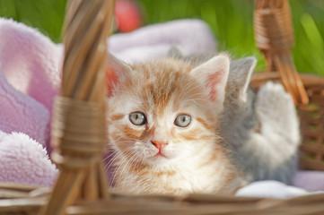 Katzenbaby im Korb