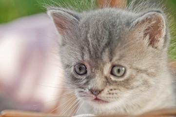 traurige Babykatze