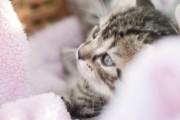 Katze mit Rosa Decke