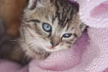 Katze sanft mit Decke
