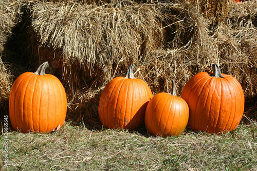 4 pumpkins in grass near hay bales