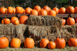 Orange pumpkins in rows on hay bales