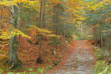 Autumn road, Gorce National Park