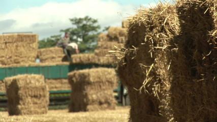Farmers putting bundles of straw in a trucks