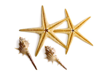Starfishes and shells.